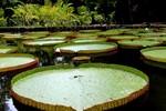 Le Jardin de Pamplemousse