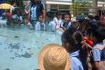 Aquarium de l'ile Maurice
